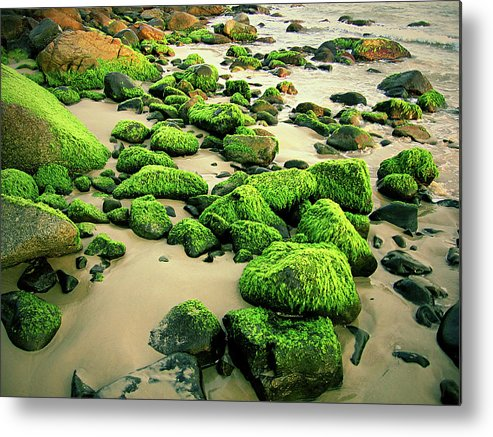 Tranquility Metal Print featuring the photograph Beach Rocks Covered With Seaweed by Andre Bernardo