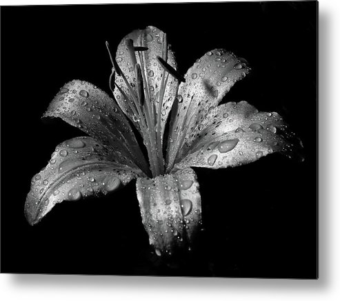 Black Background Metal Print featuring the photograph Collection by Photograph By Ryan Brady-toomey