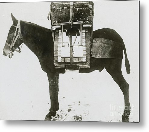 Technology Metal Print featuring the photograph Donkey Carrying Portable Telegraph by Bettmann
