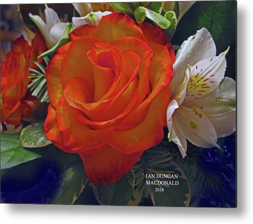 Flowers Metal Print featuring the photograph Intricate delicate by Ian MacDonald