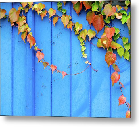 Architectural Feature Metal Print featuring the photograph Ivy On The Door by Zianlob