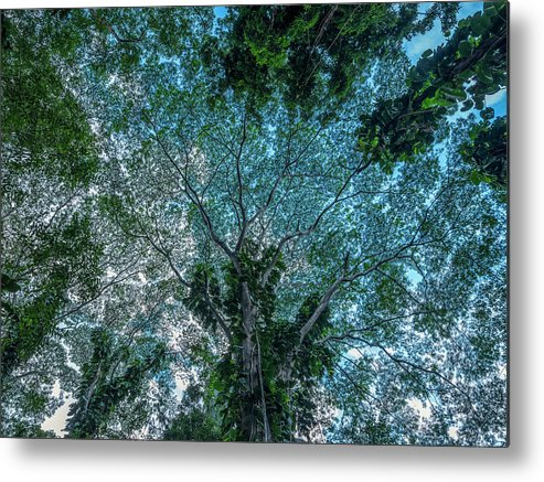 Beautiful Metal Print featuring the photograph Looking Up Into The Canopy Of Trees by Robert Postma