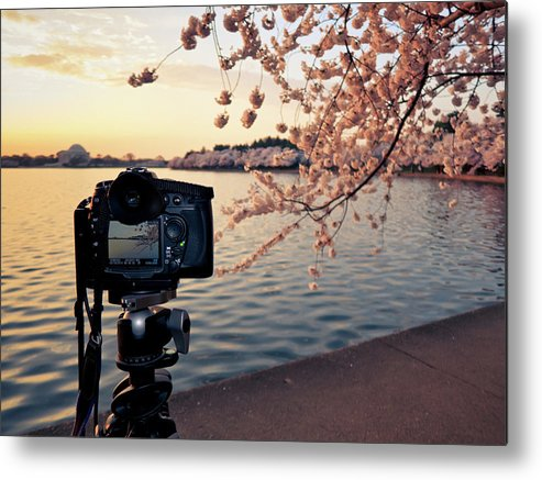 Tidal Basin Metal Print featuring the photograph Shooting Cherry Blossoms In Washington by Camrocker