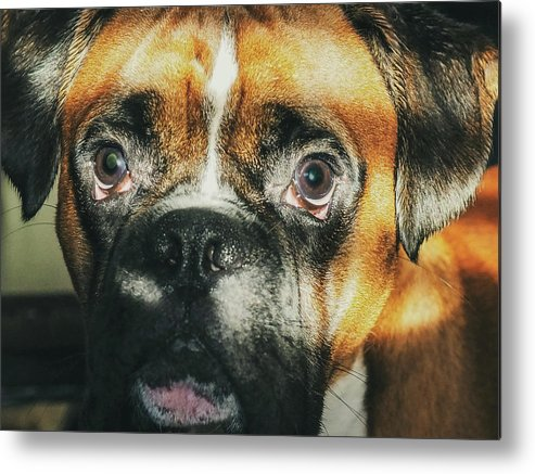 Dog Metal Print featuring the photograph Where'd Everybody Go by CWinslow Shafer