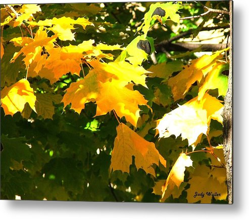Nature Metal Print featuring the photograph Autumn Leaves by Judy Waller
