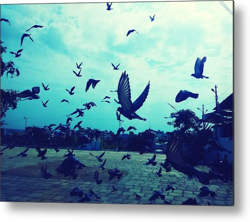 Animal Themes Metal Print featuring the photograph Flock Of Pigeons Against Sky by Azhar Naveed / EyeEm
