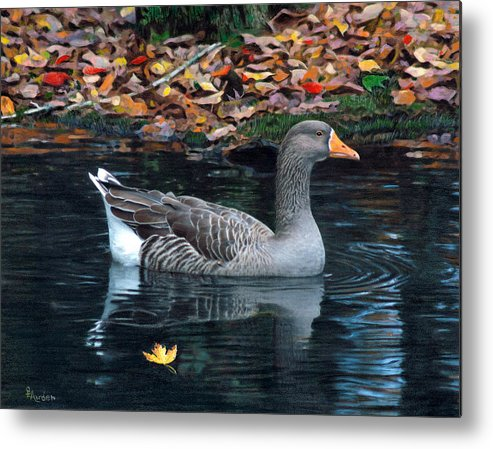 Bird Metal Print featuring the drawing Great White-fronted Goose by Brent Ander