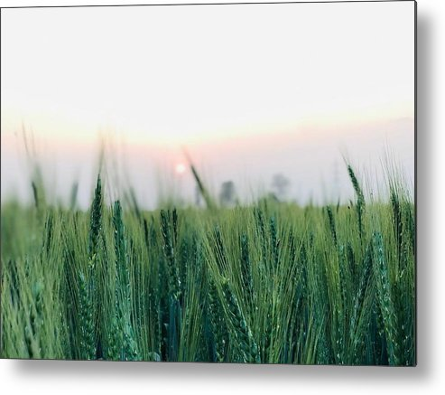 Lanscape Metal Print featuring the photograph Greenery by Prashant Dalal