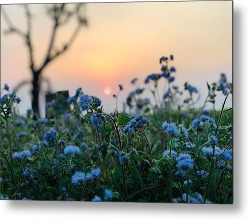 Flowers Metal Print featuring the photograph Sunset Behind Flowers by Prashant Dalal