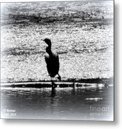 Birds Metal Print featuring the photograph Alone Time by Rennae Christman