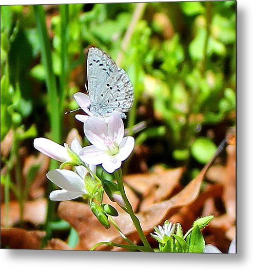Butterfly Metal Print featuring the photograph Butterfly Flower by Candice Trimble