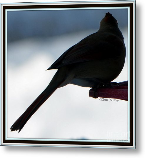Bird Metal Print featuring the photograph The Vision by Rennae Christman