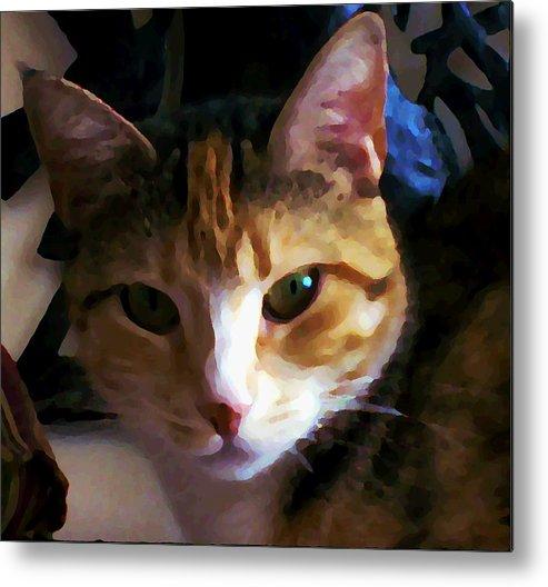 Cat Metal Print featuring the photograph Sidnie by Joseph Ferguson