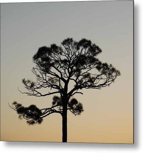Tree Metal Print featuring the photograph Trees In Sunset by Rob Hans