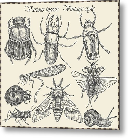 Engraving Metal Print featuring the digital art Vector Set Insects In Vintage Style by Horg