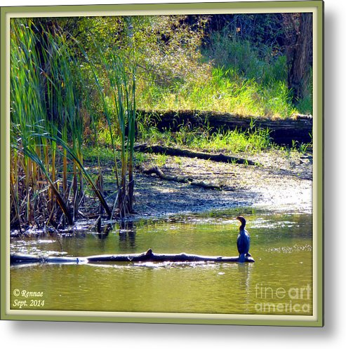 Bird Metal Print featuring the photograph Afternoon View by Rennae Christman