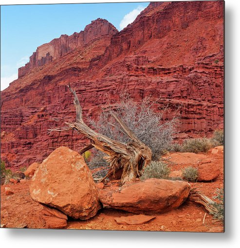 Cedar Tree Metal Print featuring the photograph Cedar Wood Tree, Fisher Towers, Moab by Fotomonkee