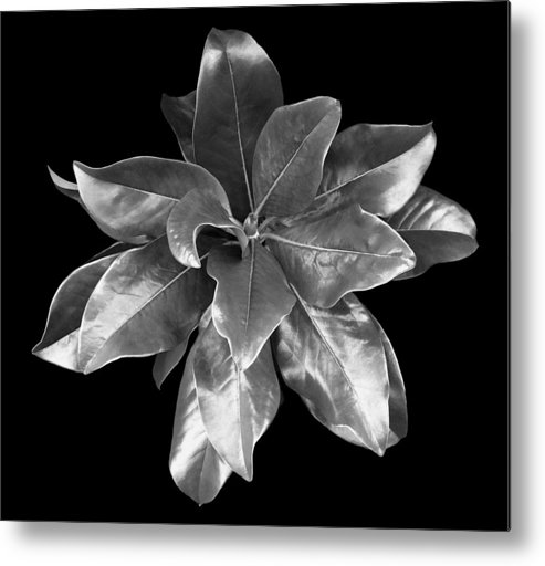 Magnolia Metal Print featuring the photograph Magnolia Tree Leaves by Marilyn Hunt