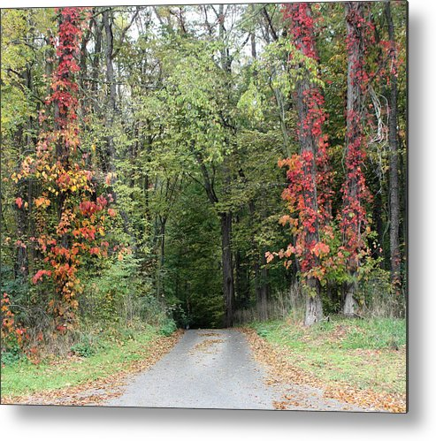 Michigan Metal Print featuring the photograph Michigan's Gateway to Fall by Ann Marie Chaffin
