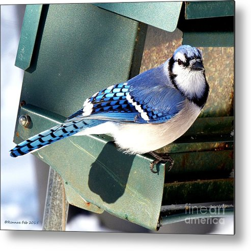 Bird Metal Print featuring the photograph Mr. Blue Jay l by Rennae Christman