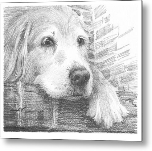 <a Href=http://miketheuer.com Target =_blank>www.miketheuer.com</a> Old Labrador Dog Resting Pencil Portrait Metal Print featuring the drawing Old Labrador Dog Resting Pencil Portrait by Mike Theuer