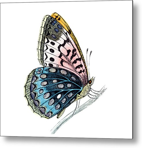 Engraving Metal Print featuring the digital art Venus Fritillary Butterfly by Andrew howe
