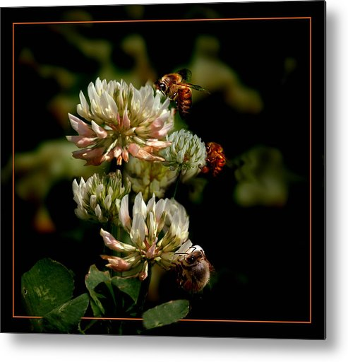 Bees Metal Print featuring the photograph In The Work by Richard Gordon