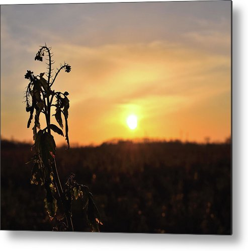 Sonnenuntergang Blume Flowwer Sky Himmel Metal Print featuring the photograph Sonnenuntergang by Scimitarable