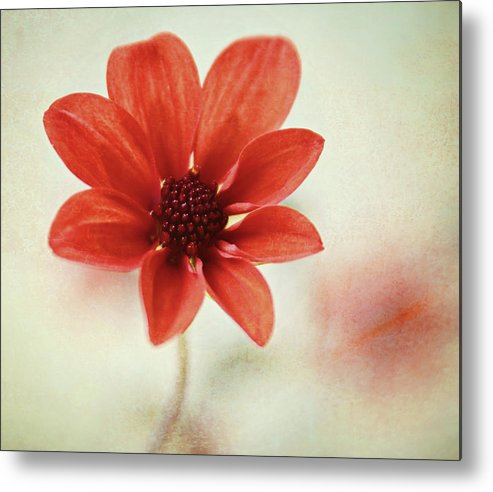 Orange Color Metal Print featuring the photograph Pretty Orange Flower by Captured By Karen Photography