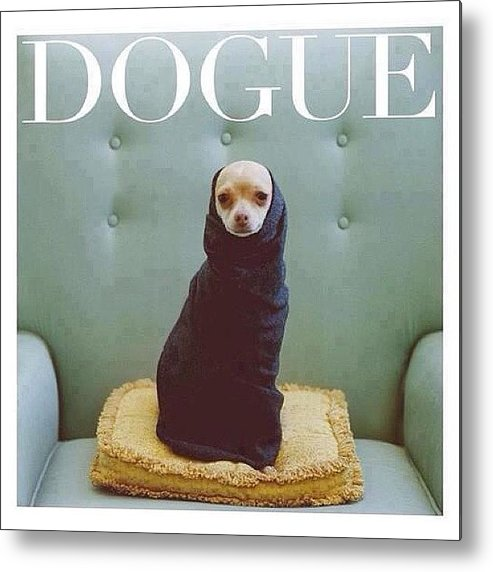 Dogue Metal Print featuring the photograph 😂😂😂😂 #dogue #vogue by Matheo Montes