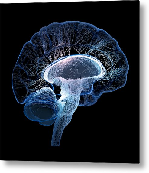 Brain Metal Print featuring the photograph Human brain complexity by Johan Swanepoel