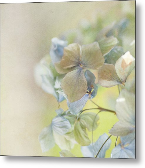Hydrangea Metal Print featuring the photograph Hydrangea by Jill Ferry