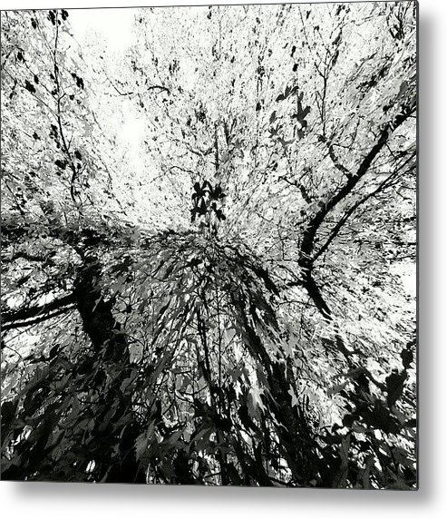 Abstract Metal Print featuring the photograph Maple Tree Inkblot by CML Brown