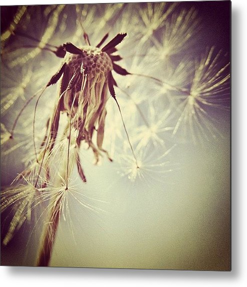 Wish Metal Print featuring the photograph #mgmarts #dandelion #makeawish #wish by Marianna Mills