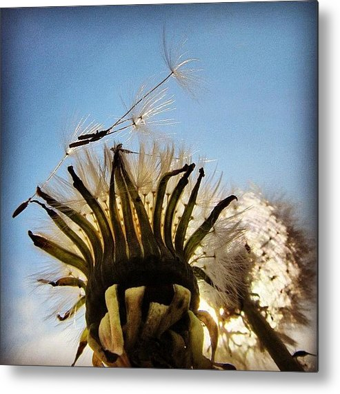 Life Metal Print featuring the photograph #mgmarts #dandelion by Marianna Mills