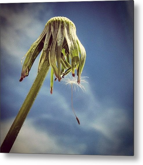 Lonely Metal Print featuring the photograph The Last Wish by Marianna Mills