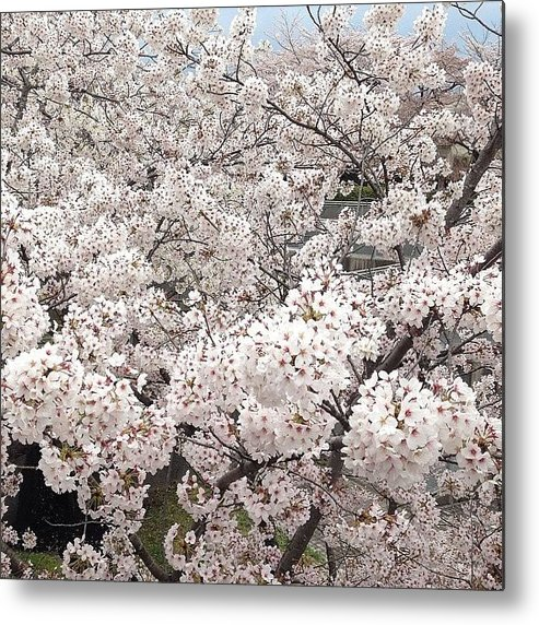 Metal Print featuring the photograph Cherryblossoms by Tokyo Sanpopo