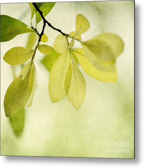 Foliage Metal Print featuring the photograph Green Foliage Series by Priska Wettstein