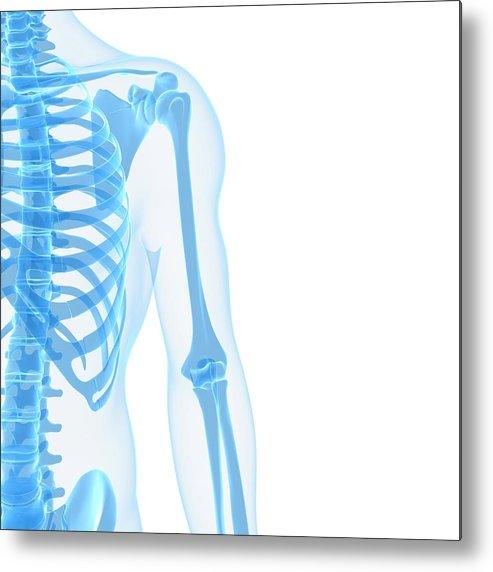 White Background Metal Print featuring the digital art Upper Body Bones, Artwork by Sciepro