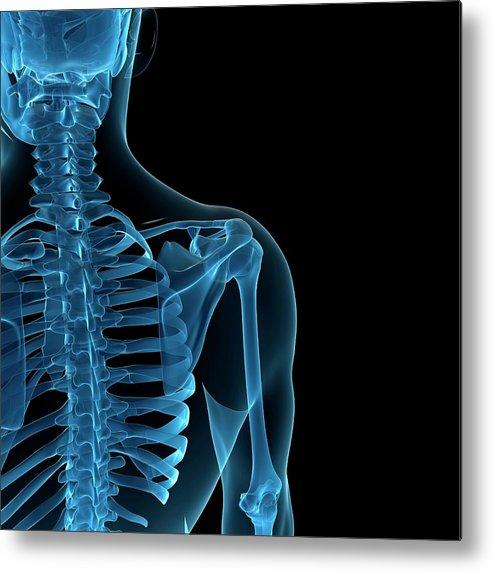 Anatomy Metal Print featuring the digital art Upper Body Bones, Artwork by Sciepro