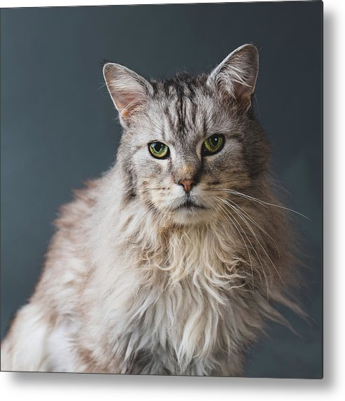 Pets Metal Print featuring the photograph Fortunate Tails by Matt Porteous