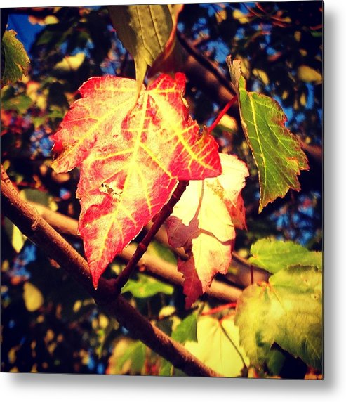 Changing Metal Print featuring the photograph Changing Season by Candice Trimble