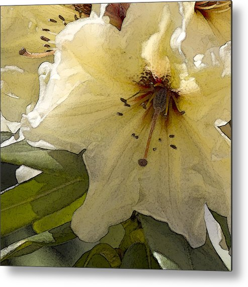 Lily Metal Print featuring the photograph Creme Rhody by Stephen Prestek