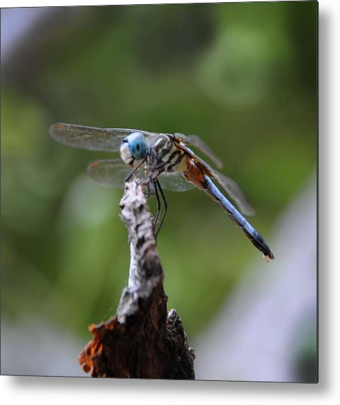 Dragonfly Metal Print featuring the photograph Dragonfly 02 by Leon Hollins III