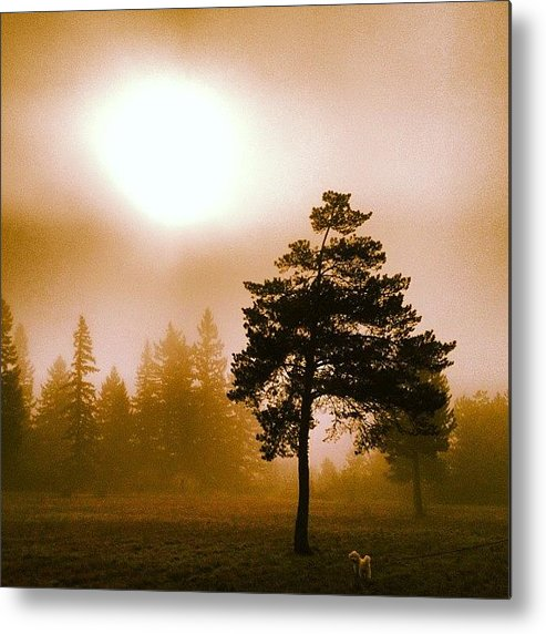 Beautiful Metal Print featuring the photograph Morning Light by Blenda Studio