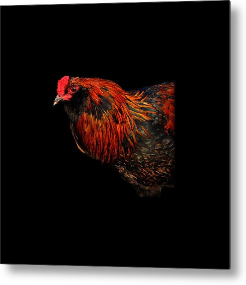 Fine Art Metal Print featuring the photograph hen by Leon Hollins III