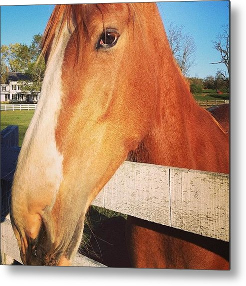Horse Metal Print featuring the photograph #horse #pretty #nature #wow #amazing by Amber Campanaro