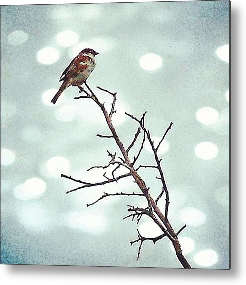 Life Metal Print featuring the photograph #mgmarts #bird #nature #life #bestpic by Marianna Mills