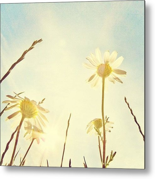Summer Metal Print featuring the photograph #mgmarts #daisy #all_shots #dreamy by Marianna Mills