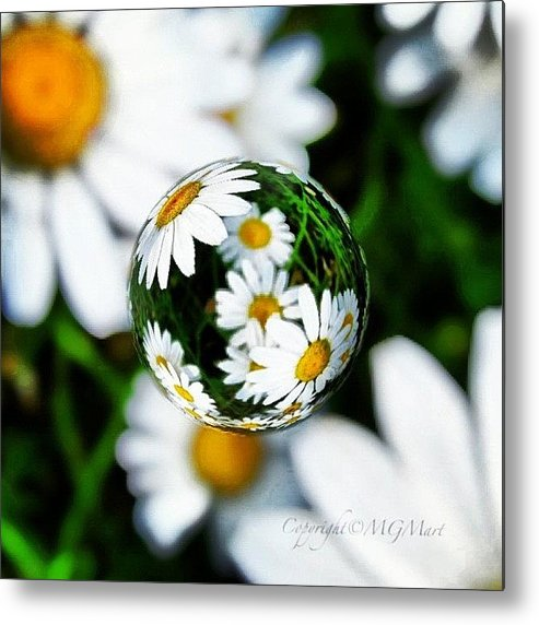 Summer Metal Print featuring the photograph #mgmarts #daisy #flower #weed #summer by Marianna Mills